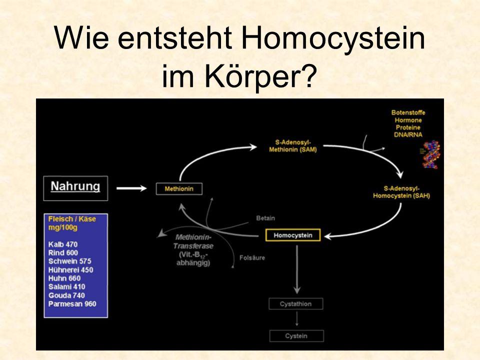 Wie entsteht Homocystein im Körper