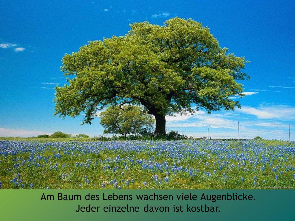 Am Baum des Lebens wachsen viele Augenblicke