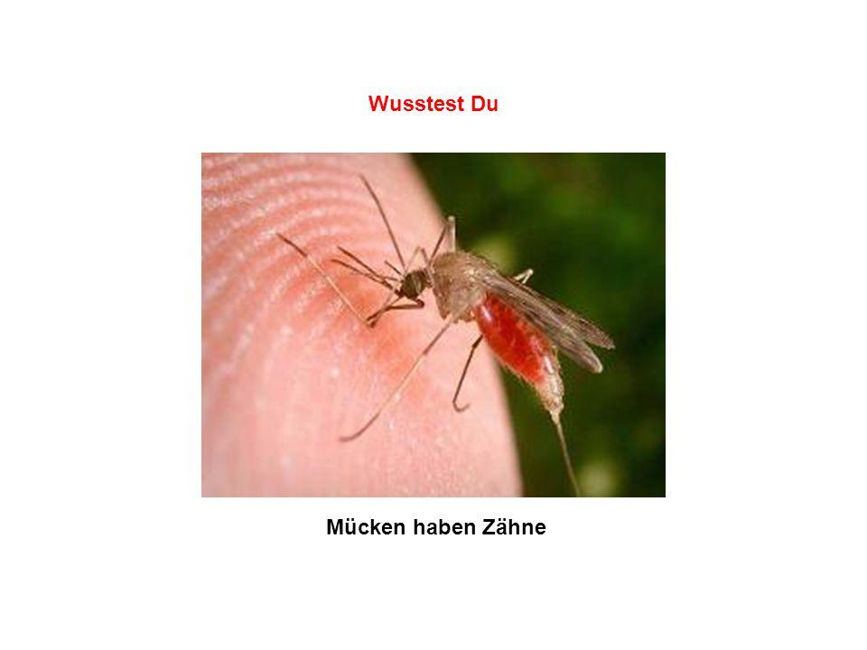 Wusstest Du Mücken haben Zähne