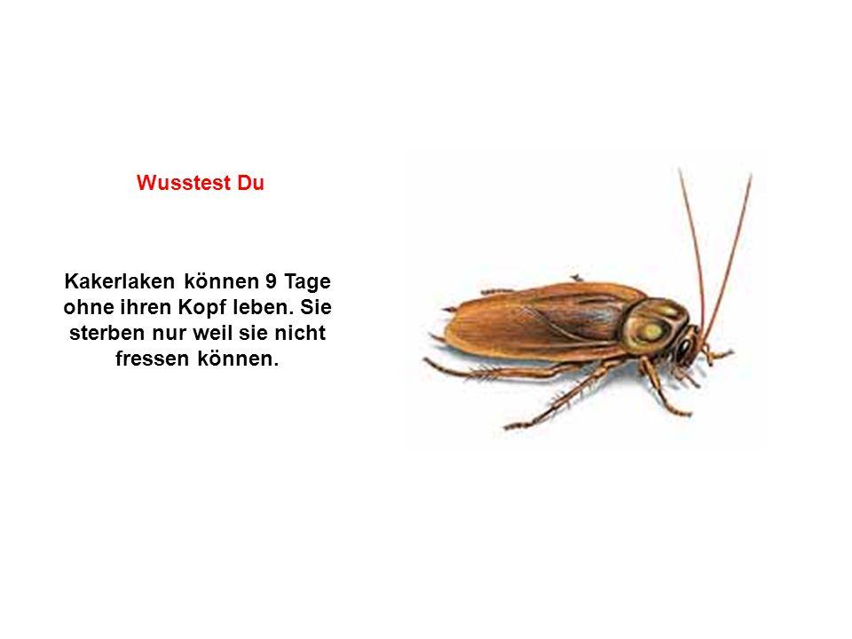 Wusstest Du Kakerlaken können 9 Tage ohne ihren Kopf leben.