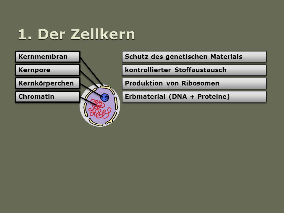 download Polyoxometalate Chemistry for Nano Composite Design 2004