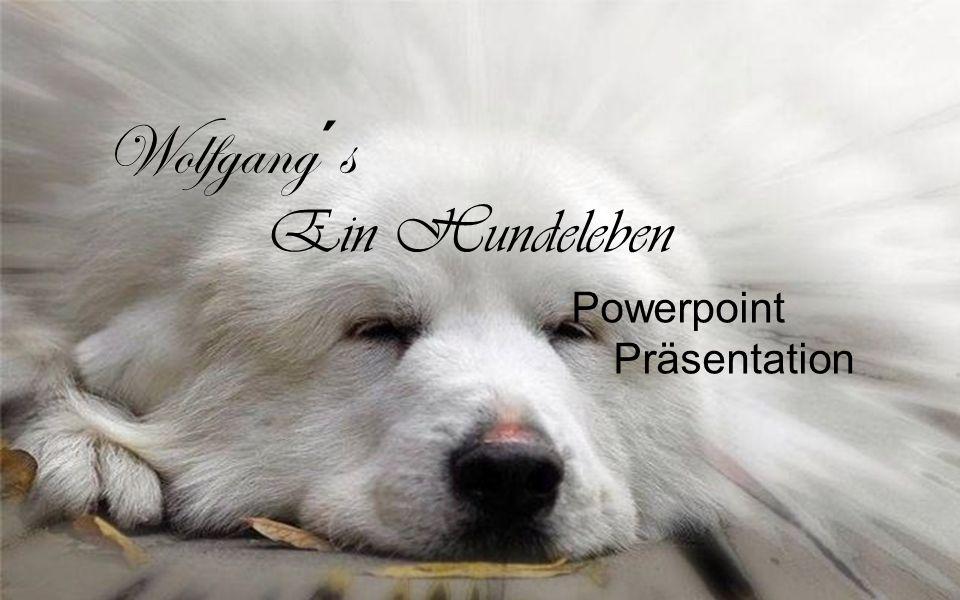 Wolfgang´s Powerpoint Präsentation Ein Hundeleben