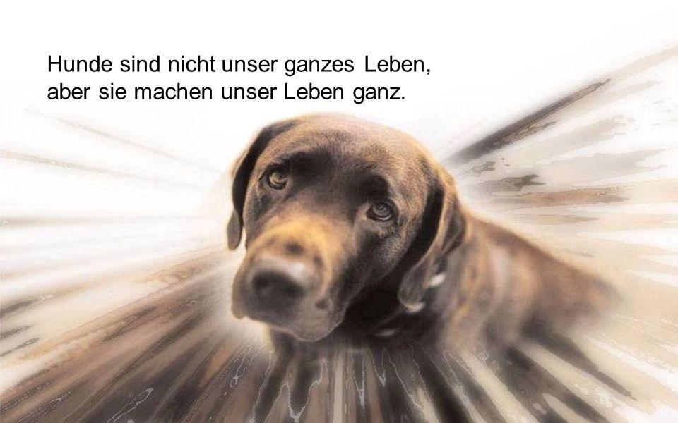 Hunde sind nicht unser ganzes Leben,