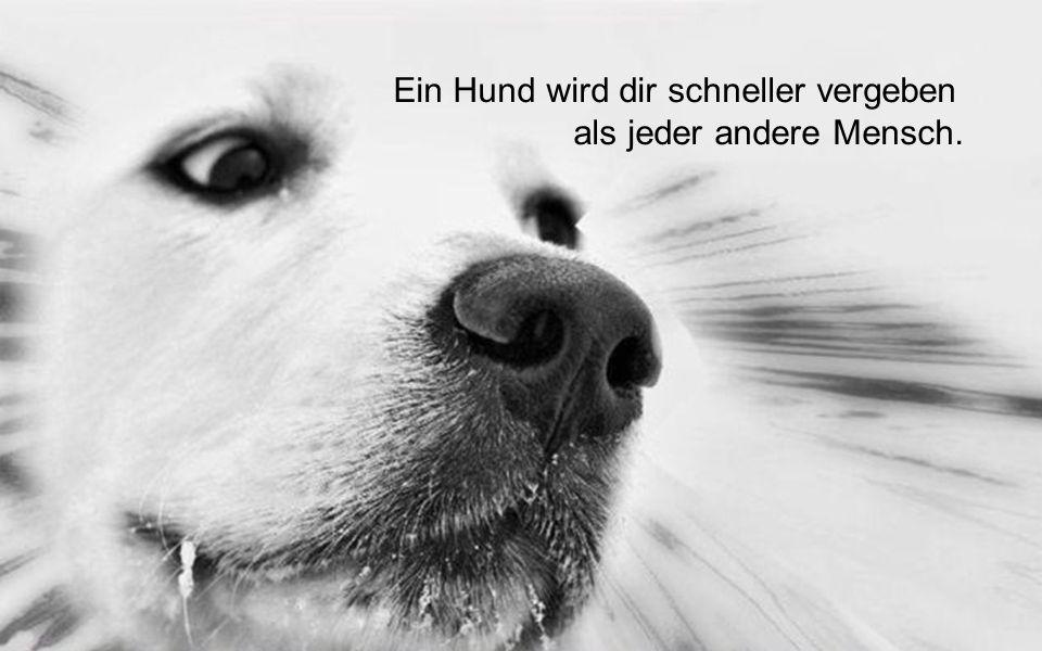 Ein Hund wird dir schneller vergeben