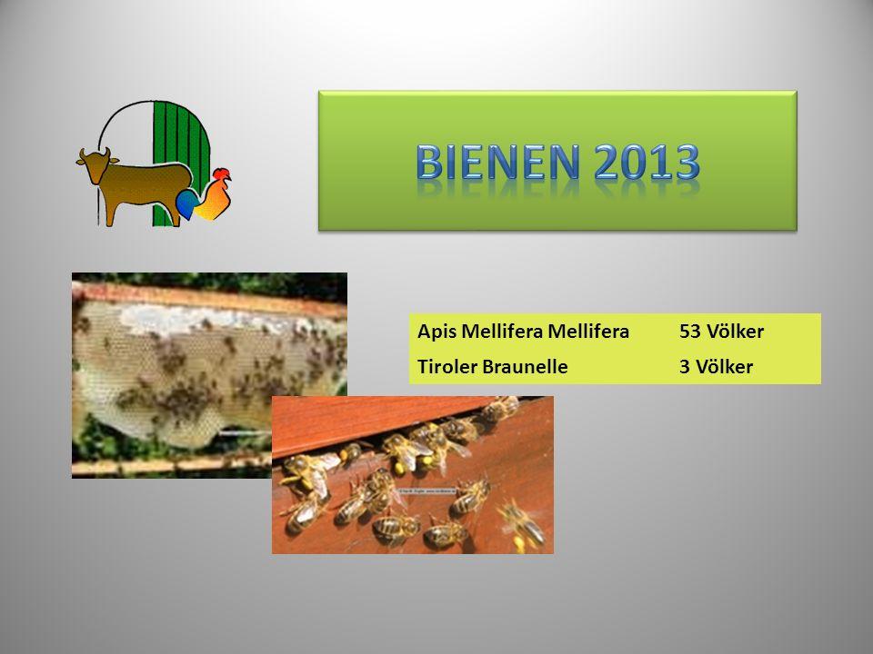 Bienen 2013 Apis Mellifera Mellifera 53 Völker Tiroler Braunelle