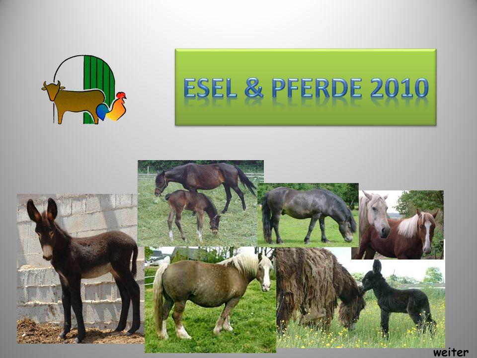 Esel & Pferde 2010 weiter