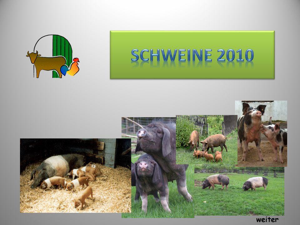 Schweine 2010 weiter