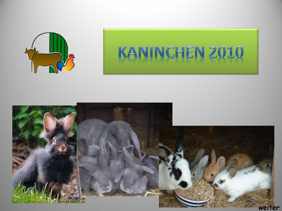 Kaninchen 2010 weiter