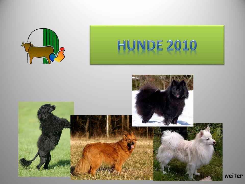 Hunde 2010 weiter