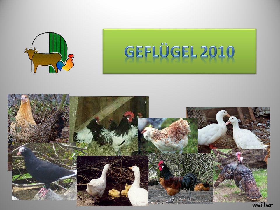 Geflügel 2010 weiter