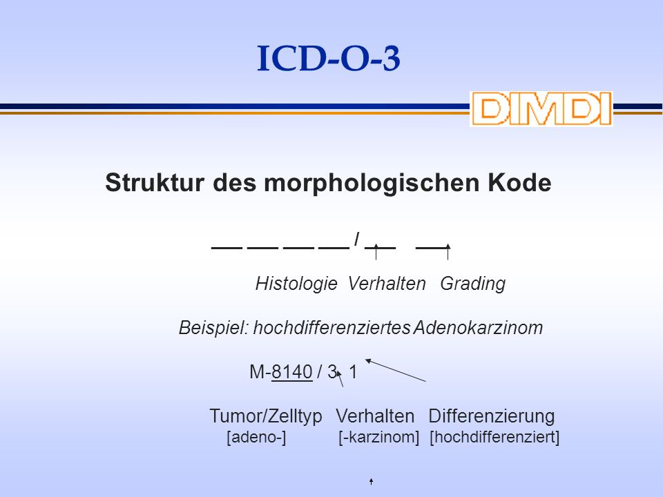 Struktur des morphologischen Kode