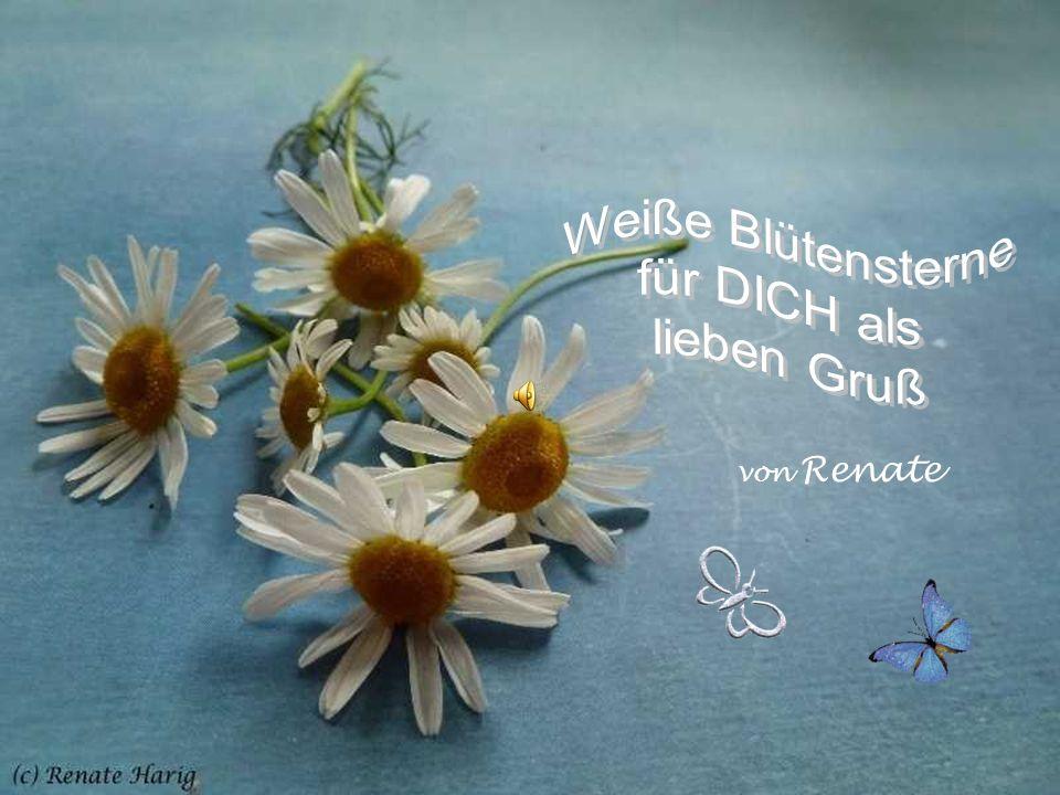 Weiße Blütensterne für DICH als lieben Gruß von Renate