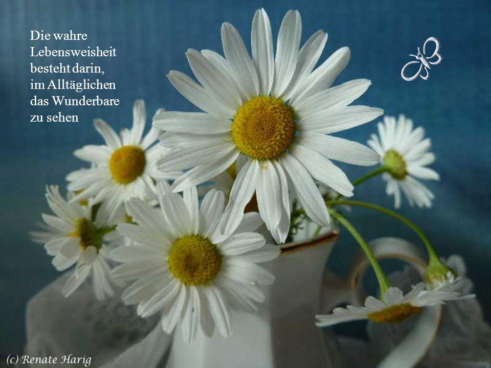 Die wahre Lebensweisheit besteht darin, im Alltäglichen das Wunderbare zu sehen
