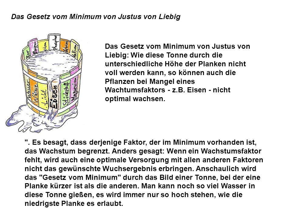 Das Gesetz vom Minimum von Justus von Liebig