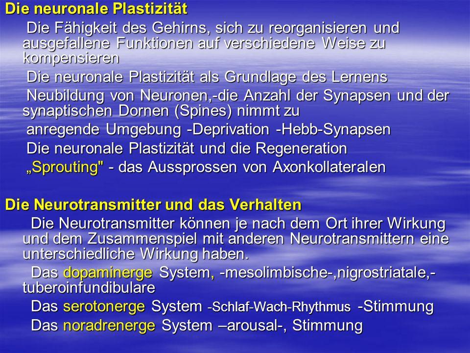 Die neuronale Plastizität