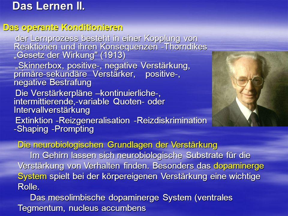 Das Lernen II. Das operante Konditionieren