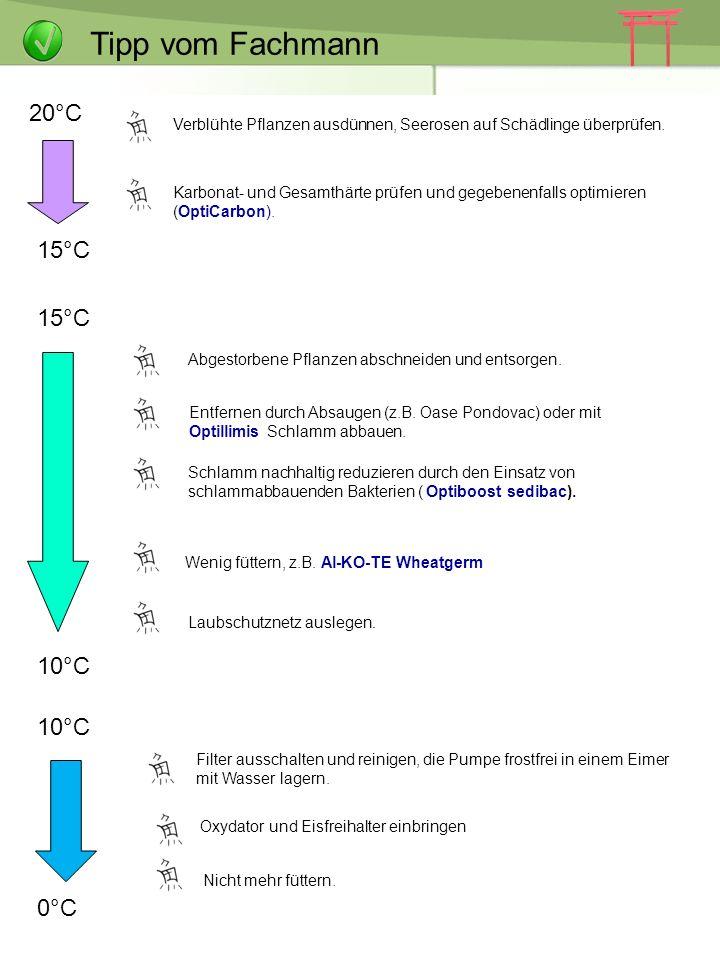 Tipp vom Fachmann Der Teich im Herbst und Winter 20°C 15°C 15°C 10°C