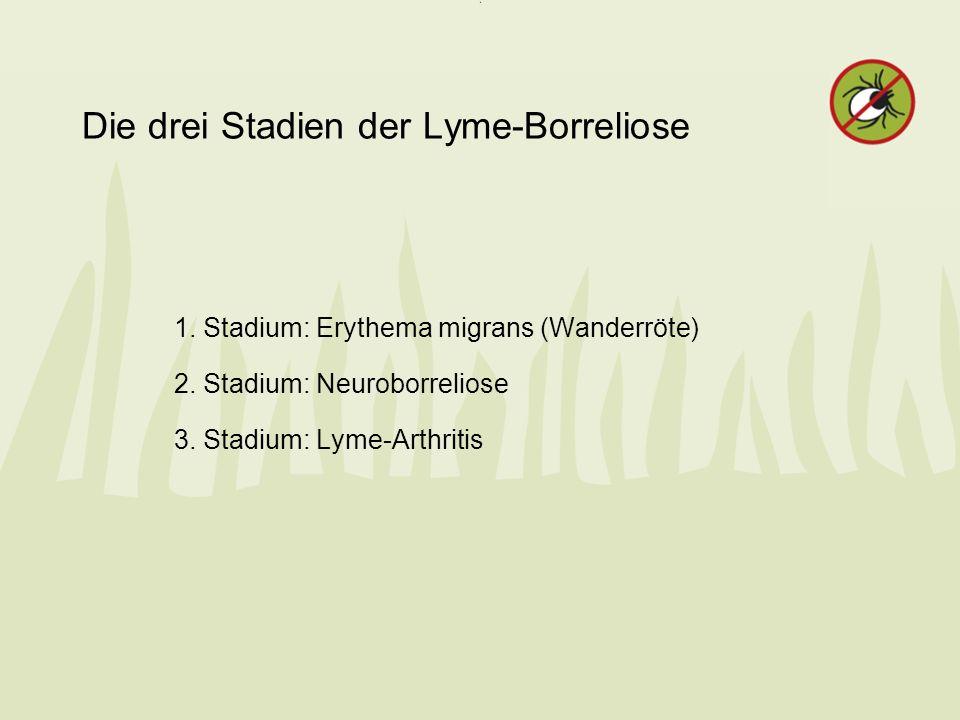 Die drei Stadien der Lyme-Borreliose
