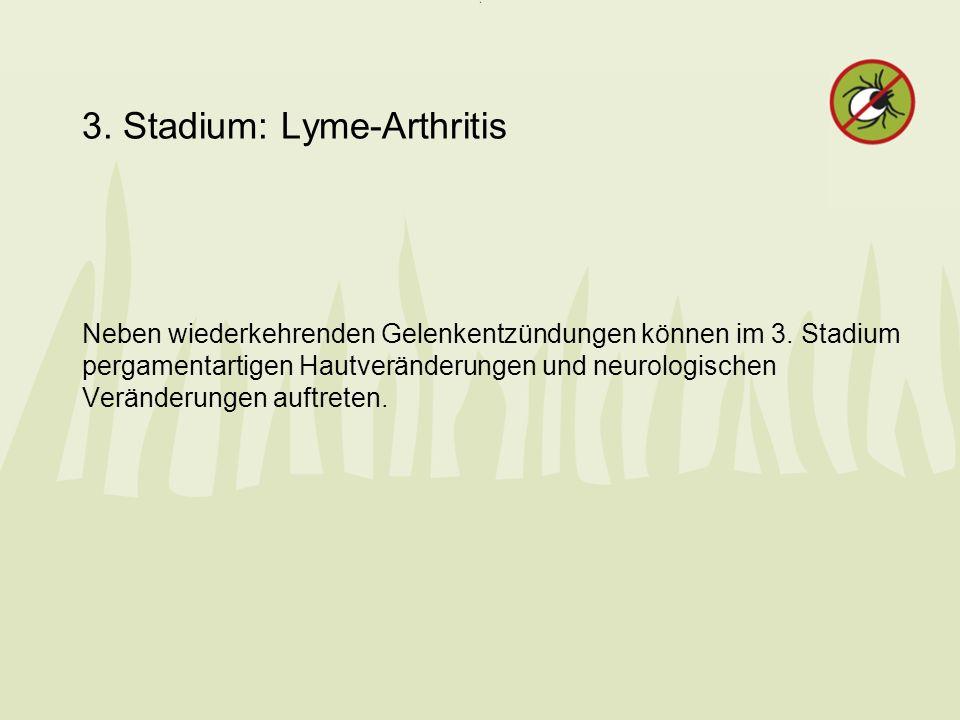 3. Stadium: Lyme-Arthritis