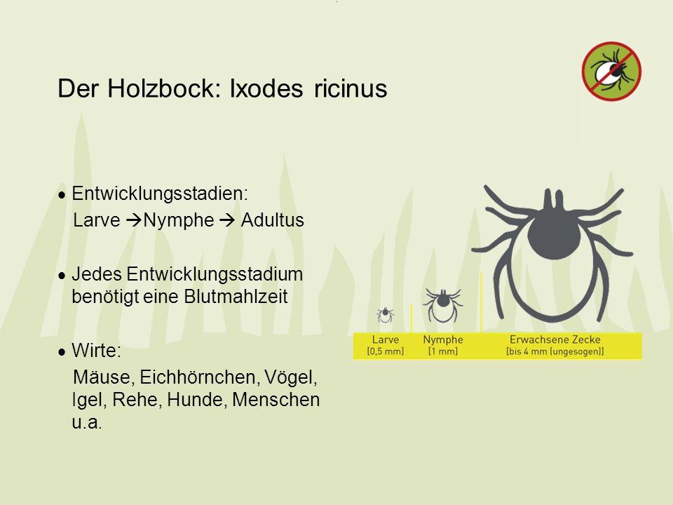 Der Holzbock: Ixodes ricinus