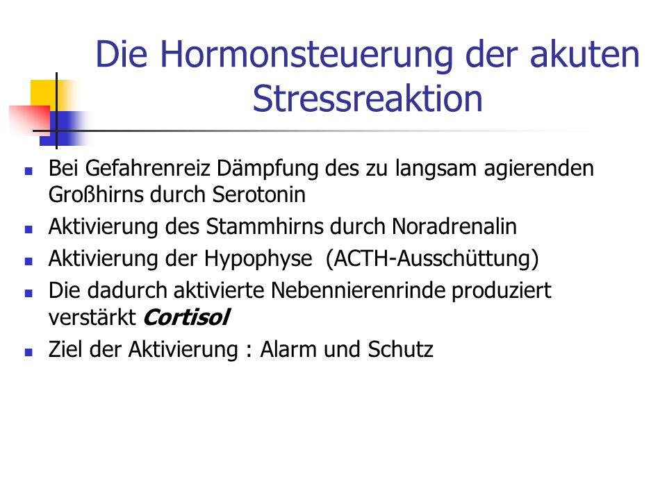 Die Hormonsteuerung der akuten Stressreaktion