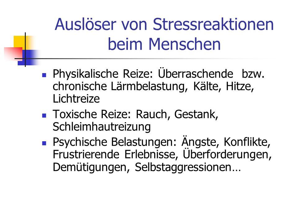 Auslöser von Stressreaktionen beim Menschen