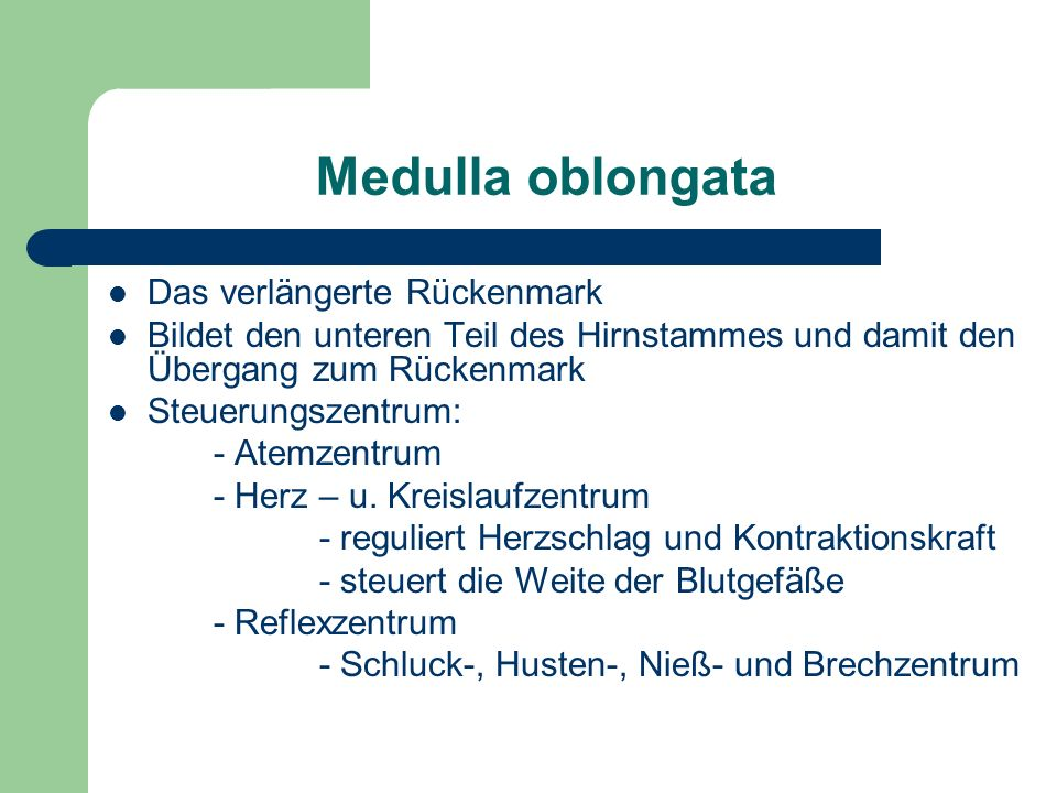 Medulla oblongata Das verlängerte Rückenmark