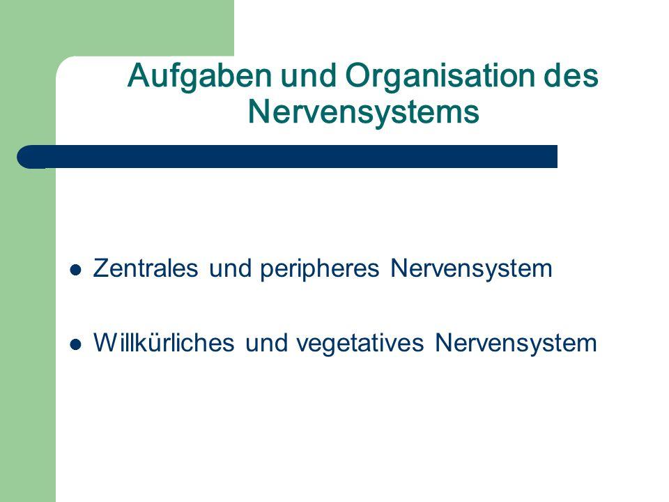 Aufgaben und Organisation des Nervensystems