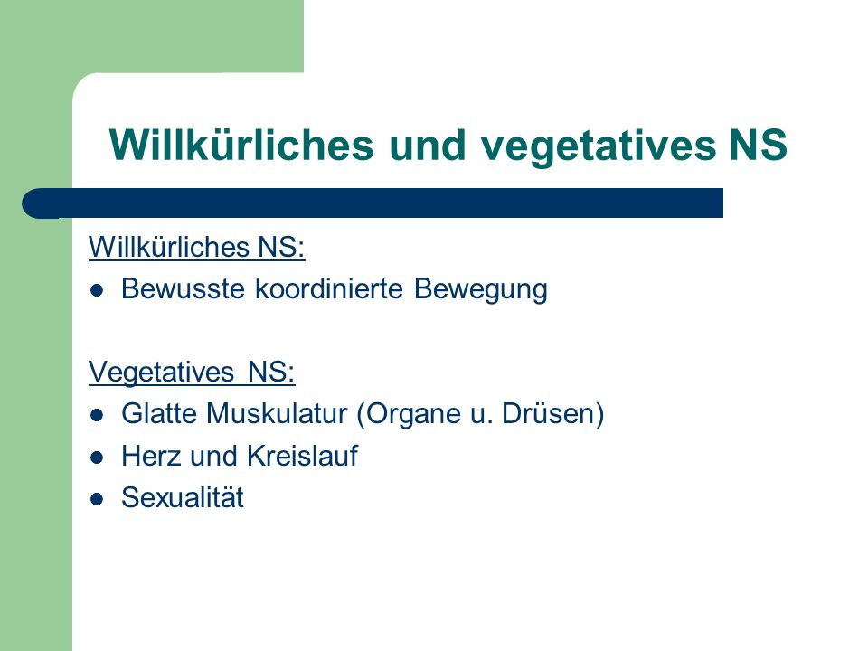 Willkürliches und vegetatives NS