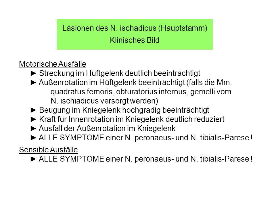 Läsionen des N. ischadicus (Hauptstamm)