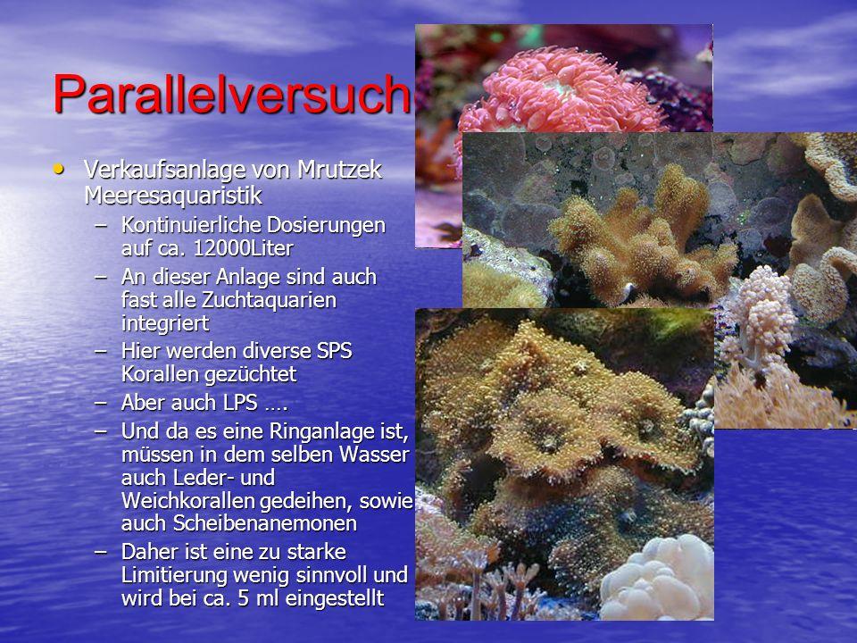 Parallelversuche… Verkaufsanlage von Mrutzek Meeresaquaristik