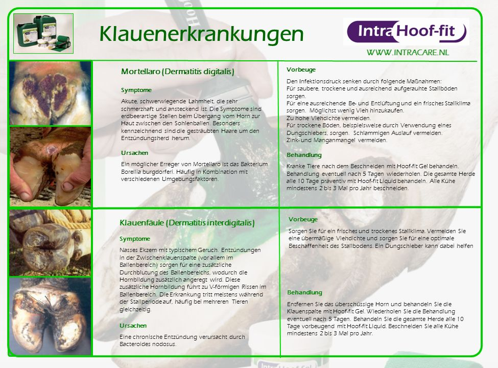 Klauenerkrankungen WWW.INTRACARE.NL Mortellaro (Dermatitis digitalis)