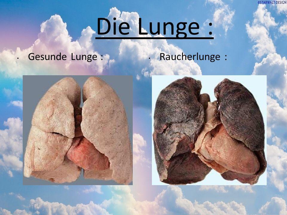 Die Lunge : Gesunde Lunge : Raucherlunge :