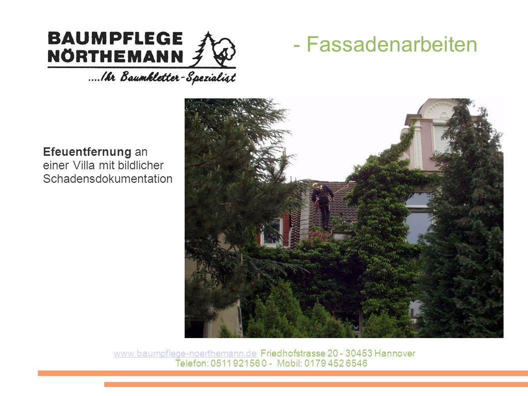 - Fassadenarbeiten Efeuentfernung an einer Villa mit bildlicher Schadensdokumentation.