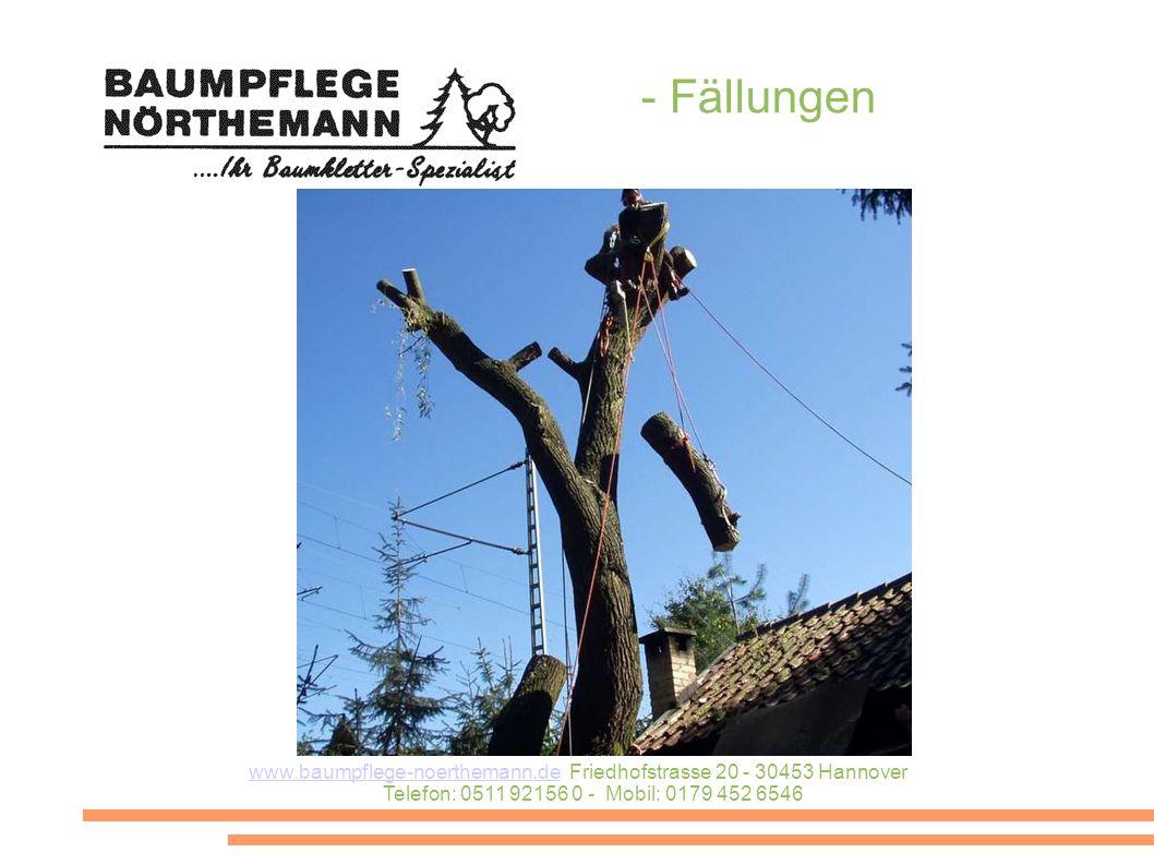 - Fällungen www.baumpflege-noerthemann.de Friedhofstrasse 20 - 30453 Hannover Telefon: 0511 92156 0 - Mobil: 0179 452 6546.