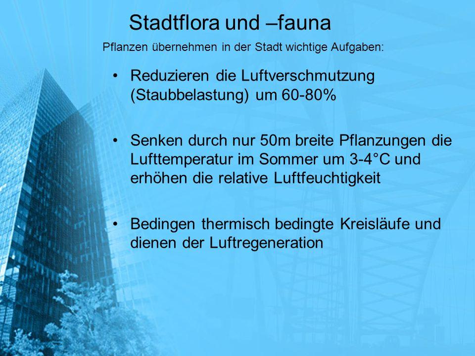 Stadtflora und –fauna Pflanzen übernehmen in der Stadt wichtige Aufgaben: Reduzieren die Luftverschmutzung (Staubbelastung) um 60-80%
