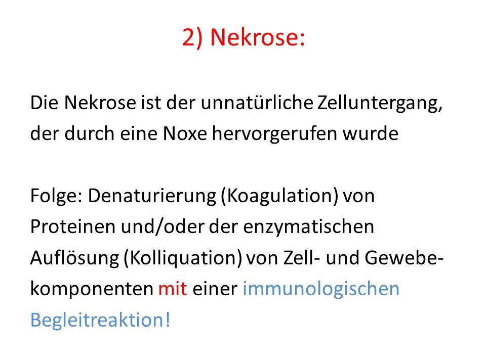 2) Nekrose: Die Nekrose ist der unnatürliche Zelluntergang,
