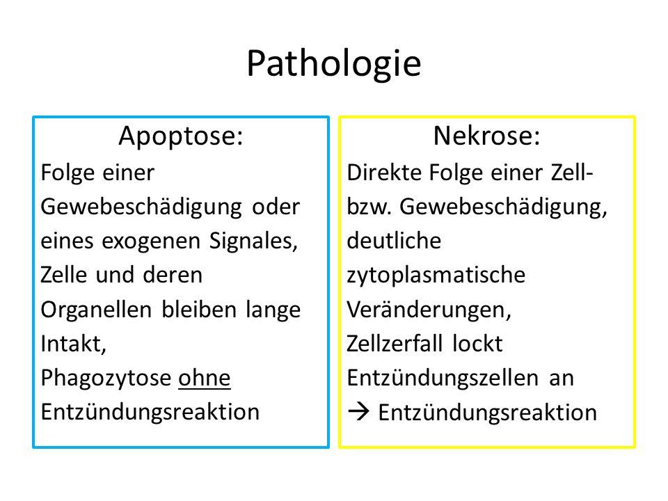Pathologie Apoptose: Nekrose: Folge einer Gewebeschädigung oder