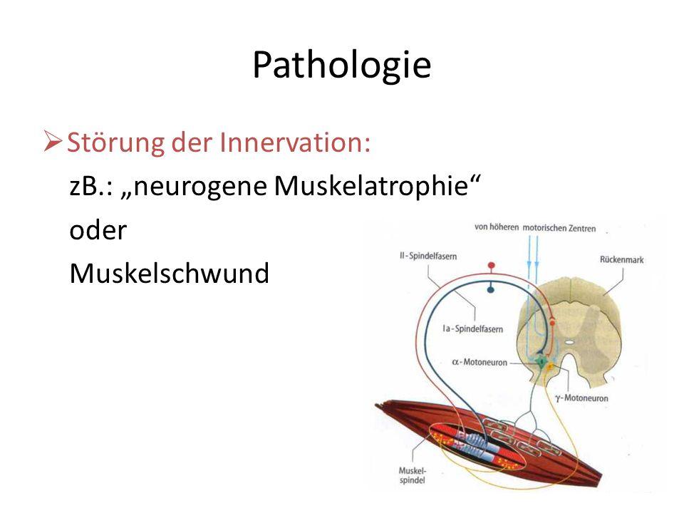 """Pathologie Störung der Innervation: zB.: """"neurogene Muskelatrophie"""
