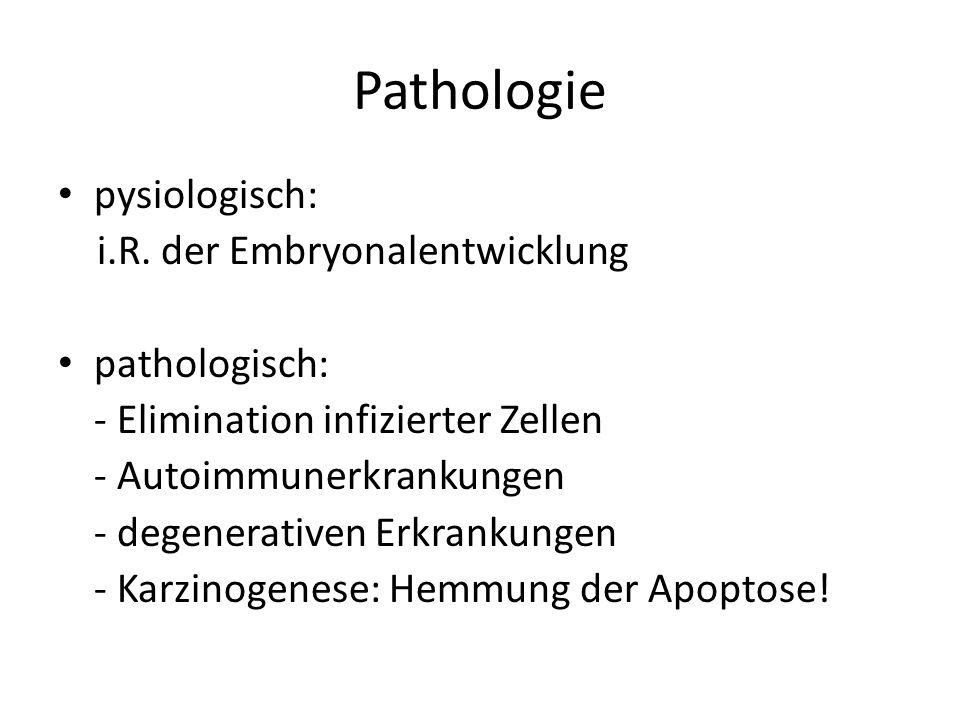 Pathologie pysiologisch: i.R. der Embryonalentwicklung pathologisch: