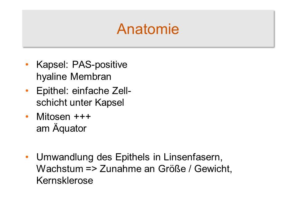 Großzügig Anatomie Einer Linse Zeitgenössisch - Menschliche Anatomie ...