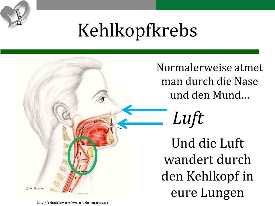 Kehlkopfkrebs Normalerweise atmet man durch die Nase und den Mund… Luft. Und die Luft wandert durch den Kehlkopf in eure Lungen.