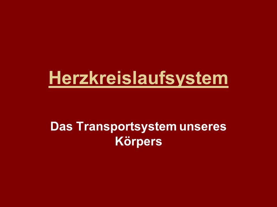 Das Transportsystem unseres Körpers