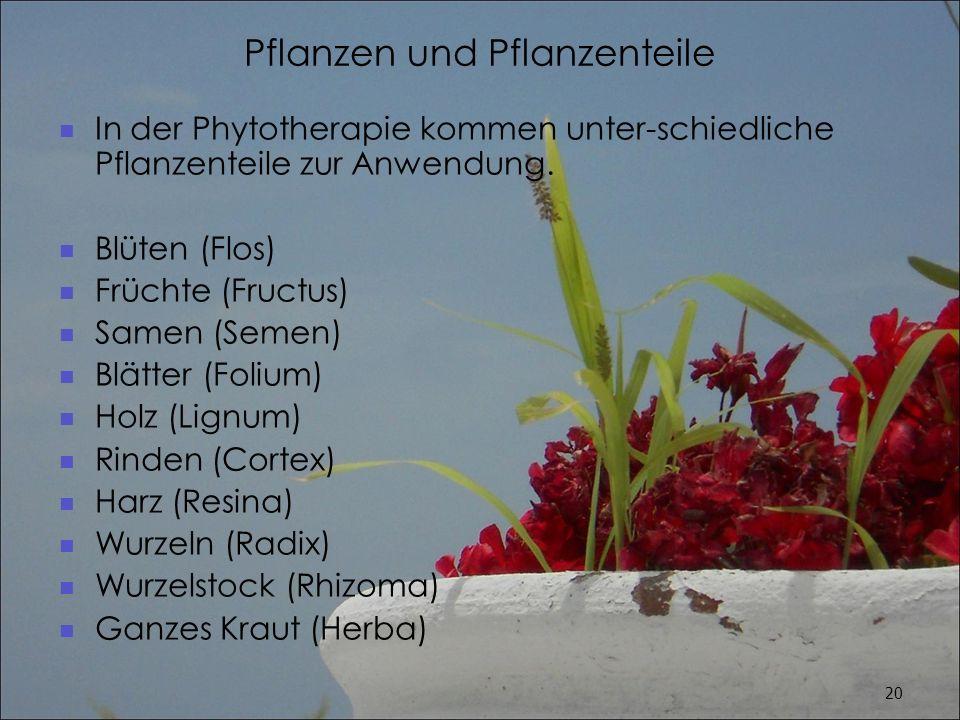 Pflanzen und Pflanzenteile
