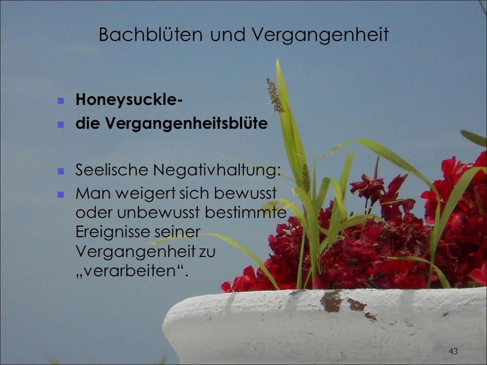 Bachblüten und Vergangenheit