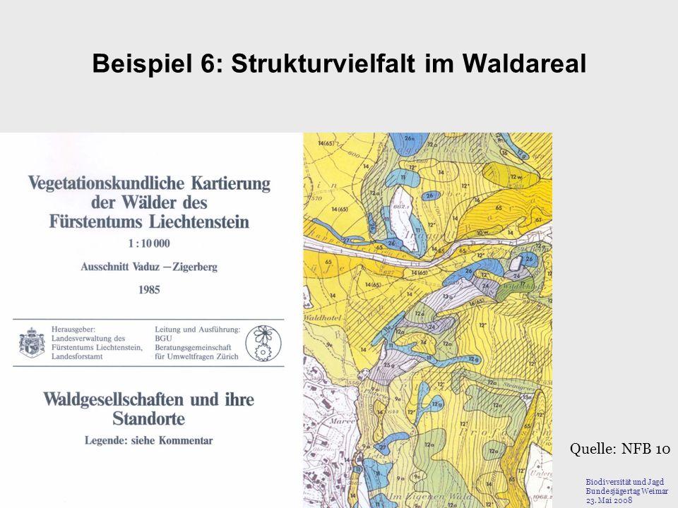 Beispiel 6: Strukturvielfalt im Waldareal