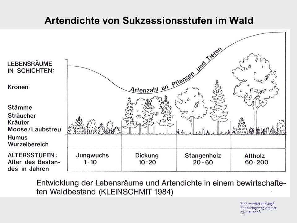 Artendichte von Sukzessionsstufen im Wald