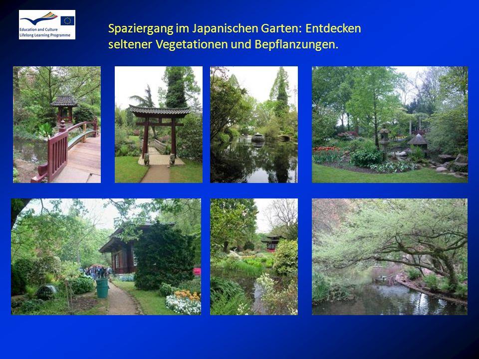 Spaziergang im Japanischen Garten: Entdecken seltener Vegetationen und Bepflanzungen.