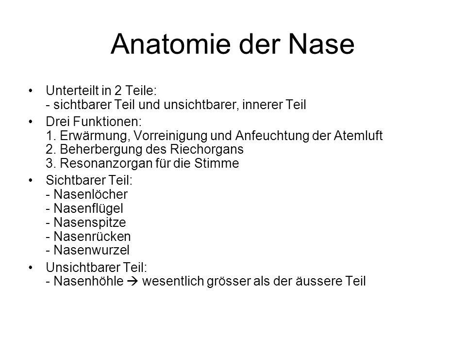 Anatomie der NaseUnterteilt in 2 Teile: - sichtbarer Teil und unsichtbarer, innerer Teil.