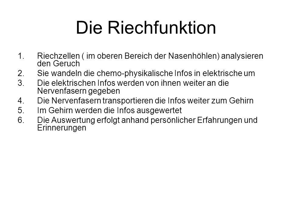 Tolle Funktion Der Nasenhöhle Zeitgenössisch - Anatomie Ideen ...